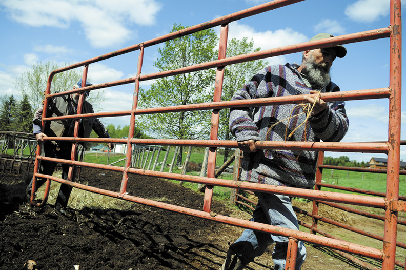 Carroll Whitten, left, and his brother, Kevin, replace a paddock gate Monday at the family's Manchester farm, after rounding up a beef herd. Several Whitten brothers and some neighbors collected the critters and transported them to a summer pasture to graze in Winthrop.