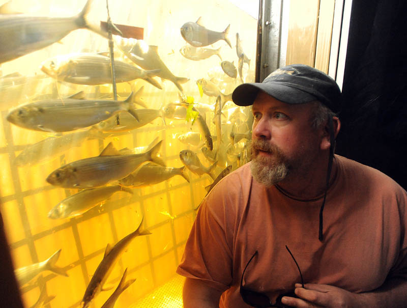 Nate Gray, the onsite biologist from the Department of Marine Resources at the Benton Falls dam, sits next to a fish observation window at the top of the dam. Gray has the duty of counting and measuring the number of alewives that pass through the dam. So far this year, only two weeks in to the run, over 1.3 million fish have been tracked.