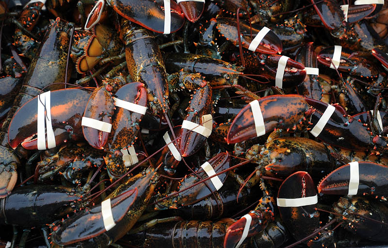 A crate full of lobster, worth $4.25 per pound, is weighed at the Friendship Lobster Co-Op in Friendship Harbor on Wednesday.