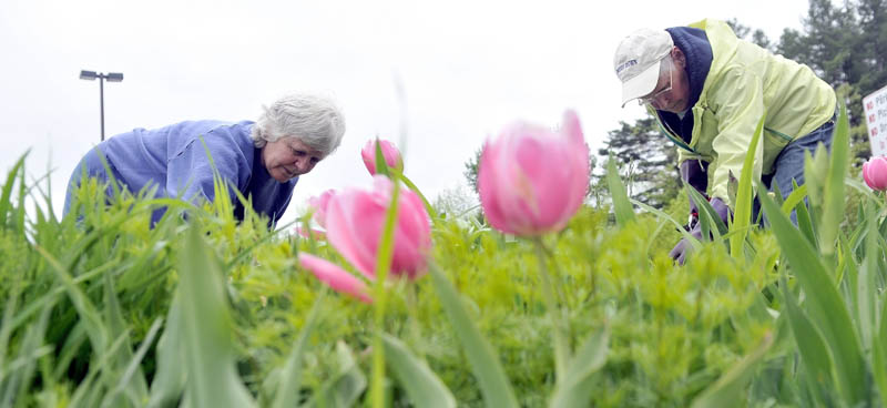 Yvonne Lefebvre, left, and Priscilla Jackson, right, both members of the Central Maine Gardening Club, weed the flower gardens outside the Alfond Youth Center on North Street in Waterville on Thursday. The gardening club will be running a a fundraiser plant sale at the Methodist church at 22 School St. in Oakland on June 8, from 8 a.m. - 12 p.m.