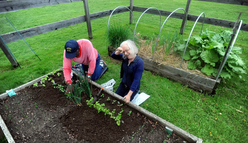 Elizabeth Vigue wipes rain from her brow as Chuck Kittrel plants peppers in their section of the Waterville Parks and Recreation garden on North Street in Waterville Friday afternoon. The couple rented the space for $10 for the summer season.