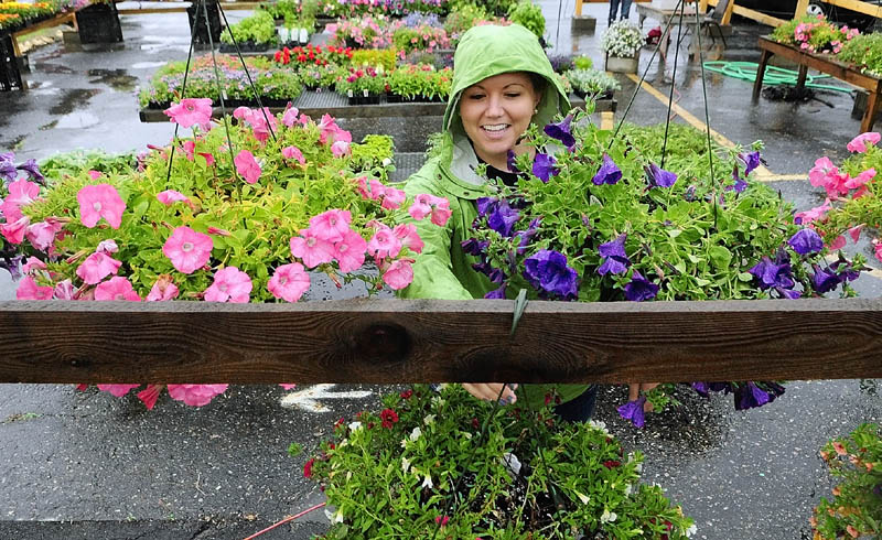 Madison McCutcheon sets up a display of hanging baskets on a rainy Tuesday at the Alden Longfellow's Greenhouses' seasonals sales display area in the DNK Select Used Cars lot on Main Street in Farmingdale.