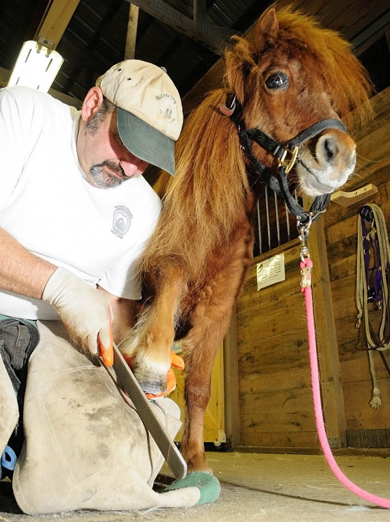 George Spear, a farrier from Oxford, trims the hoof of a miniature horse named Chaluto on Saturday during an open house at Whispering Wood Stables in Augusta. Owner Teresa Elvin bought the stable on Ingraham Mountain Road from a previous owner back in October. She said that they have boarding, clinics, riding lessons and has plans to start a 4-H group.