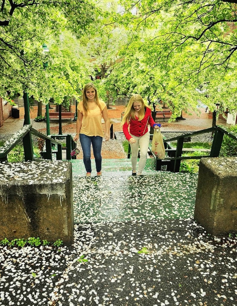 Courtney Moulton, left, and Helen Dow walk over petals fallen from blooming trees on a rainy Tuesday through Johnson Hall Mini Park in downtown Gardiner. Forecasts call for a chance of rain through Saturday.