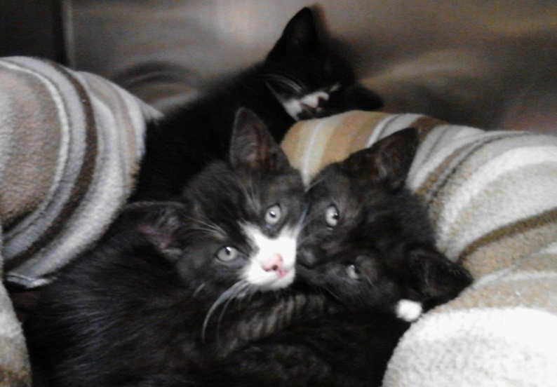 These kittens are among those found in a tote.