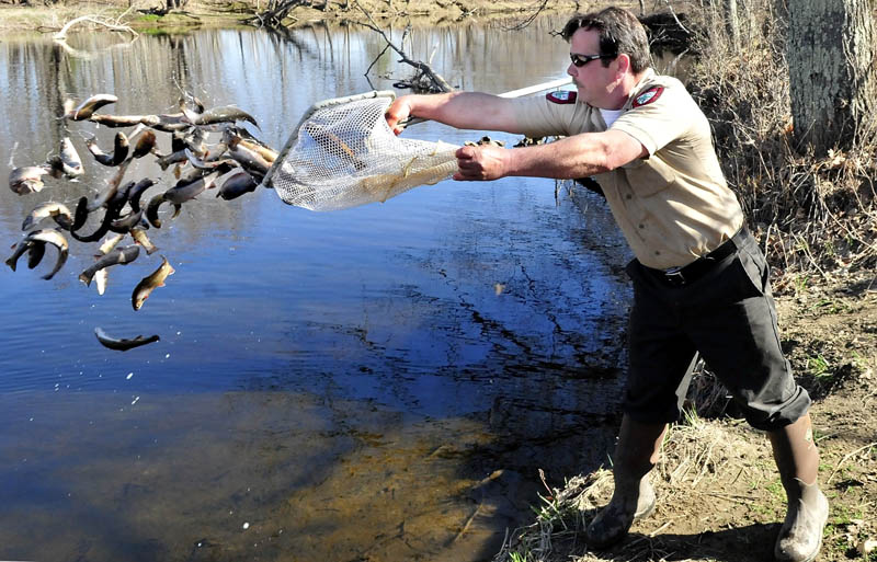 Mike Coulombe, a fish culturist with the Department of Inland Fisheries and Wildlife, releases some of the 500 brook trout stocked in Sandy Stream in Unity on Wednesday. The fish were raised at the Palermo rearing station.