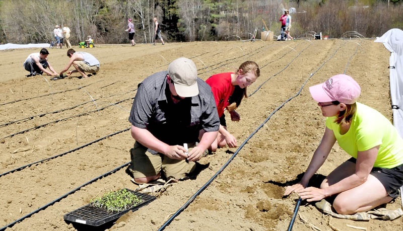 Dave Allen, left, Sarita Crandall and Patty Veayo and others plant seedlings at the Rustic Roots farm in Farmington on Sunday. Allen and partner Erica Emery maintain the community supported share garden for 30 members who work and receive produce during the growing season.