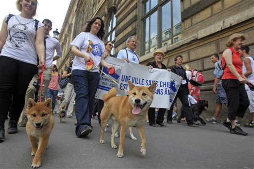 """Dog owners march toward the Tuileries Gardens, in Paris, on Saturday. At least 100 pooches with owners in tow, holding leashes, marched near the Louvre at a demonstration to demand more park space and access to public transport for the four-legged friends. The banner reads, """"A City without Dogs is a City Without Soul."""""""