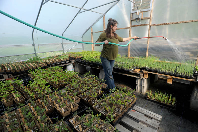Ann Mefferd, 31, waters plants in the nursery at her farm, One Drop Farm, in Cornville on Friday morning. The Mefferds started their farm in 2008 and mostly produce eggs and vegetables for the Skowhegan Farmer's Market and The Pickup, a multi-farm, community-supported agriculture program in Skowhegan.