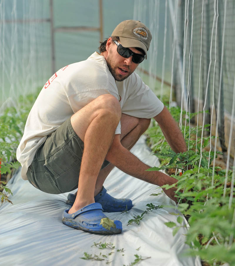 Andrew Mefferd tends to tomato plants in one of his greenhouses at his family's farm, One Drop Farm, in Cornville on Friday morning.