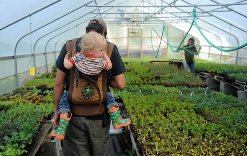 Andrew Mefferd walks through the nursery with his son, Jasper, 22 months, as his wife, Ann, waters the plants in Cornville on Friday morning. The Mefferds started their certified organic farm, One Drop Farm, in 2008.