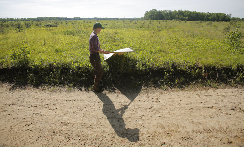 Melanie Renell uses a square piece of corduroy attached to a broomstick to gather ticks at the Kennebunk Plains in Kennebunk on Thursday for the Vector-borne Disease Laboratory of the Maine Medical Center.
