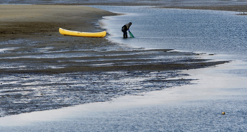 A clammer rinses off a bag of clams in the mud flats off Ferry Beach in Scarborough last February. A two-state university-led project will directly link policy decisions regarding beach and shellfish bed closings with scientific data.