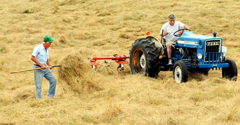 "Maynard Whitten checks the dryness of hay with a pitchfork that his son, Dwight, teds with a tractor Monday, at their Manchester farm. The Whittens have only cut 10 of the 60 acres of fields at the farm for hay this season. ""Awful hard with rain constantly,"" Whitten said."