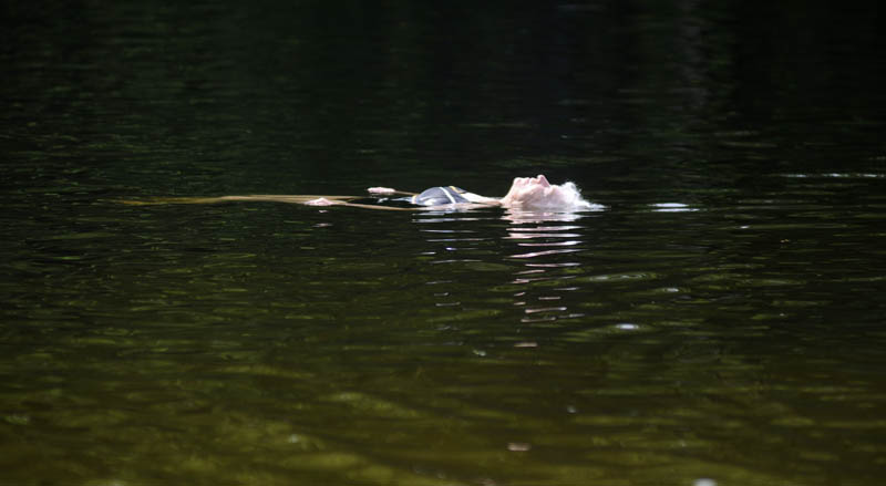 "Sybil Baker treads water at the Hallowell reservoir on Thursday in 90 F. temperatures. ""I'm happy for the first time in hours,"" the 83-year-old said."