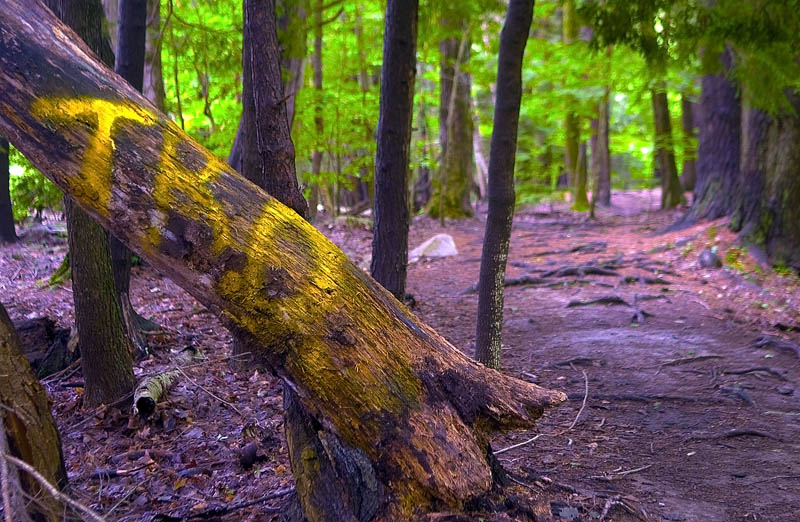 Several of the old trees in the woods were spray painted with letters, words and other images.