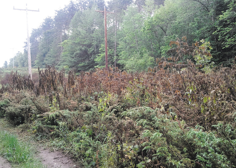 Central Maine Power recently used herbicides near a walking trail in Oakland to clear vegetation around its transmission lines, but some residents are concerned about notification of the chemical's use.