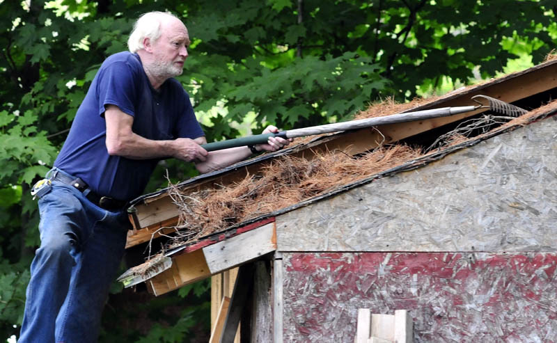 Rod Steele uses a garden rake to scrape pine needles, so he can re-roof a shed at his home in Solon, today.