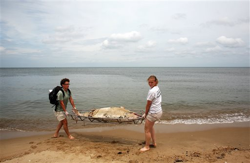 Virginia Aquarium Stranding Response Team members Krystal Rodrique, left, and intern Liz Schell carry a deceased male dolphin on a metal stretcher from Ocean View Beach in Norfolk, Va., on Aug. 1, 2013. This was their third dolphin retrieval of the day.