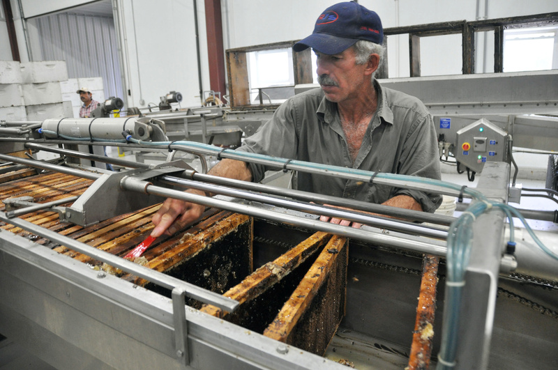 Jaime Garcia scrapes honey off a frame at the Adee Honey Farms plant in Bruce, S.D., on Tuesday. Honey extractors in South Dakota and the eastern part of North Dakota say cool summer temperatures over the past month have slowed production.