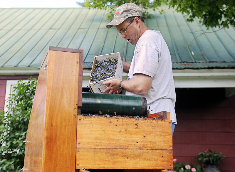 "John Kohtala pours blueberries into a winnower that his wife, Amy, packs on Aug. 11, in the yard of Kohtala Blueberry Farm in Vienna. ""We cultivate them, we rake them, we winnow them and we sell them,"" John Kohtala said of the late-summer endeavor by three generations of the family."