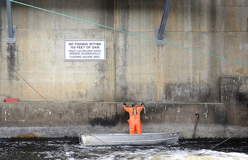 Jim Wotton, 44, claws his way along a portion of the Benton Falls Dam on the Sebasticook River, a tributary of the Kennebec River, to get to a section where alewives tend to collect in large numbers, while fishing for the silver fish to be used as lobster bait on May 16.