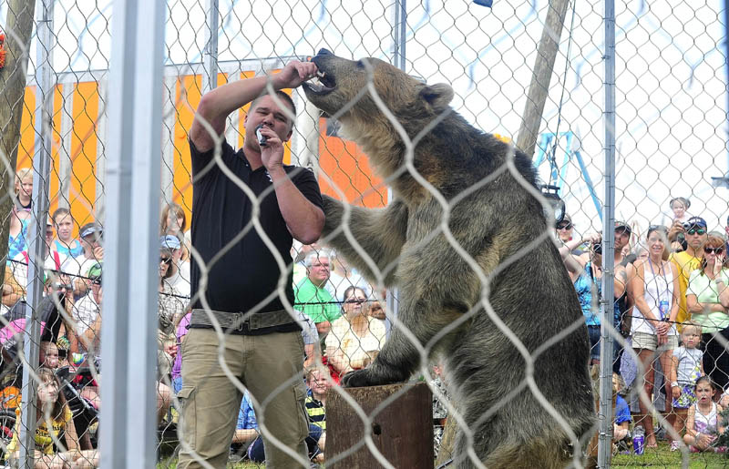 Dexter Osborn, owner of A Grizzly Experience, feeds his grizzly bear, Tonk, marshmallows during a show at the Skowhegan State Fair today.