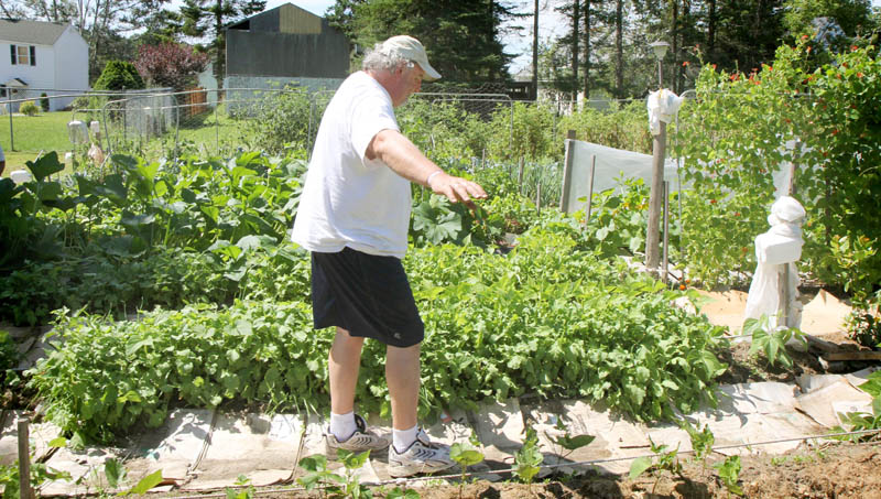 Visually impaired gardener Deon Lyons, of Clinton, carefully walks down a row before picking garlic on Wednesday at a garden he and David Perry, of Waterville, have cultivated in Fairfield.