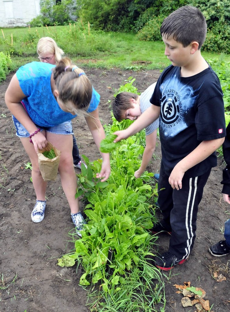 Mill Stream Elementary School students Andria Alexson and Logan Hurlbutt pick Swiss chard in a community garden in Norridgewock on Thursday. The food will go to the Norridgewock Warming Center.