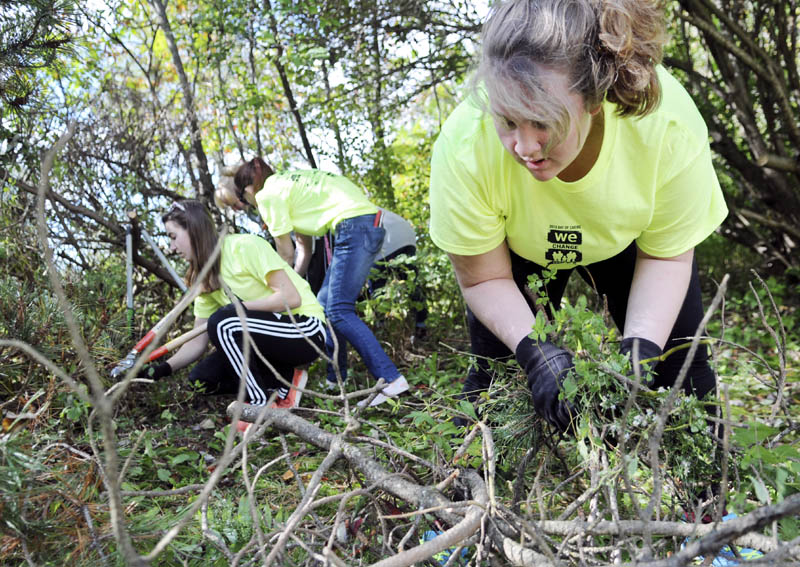Hall-Dale High School student Kyrie Johnson collects shrubs and branches her classmates pruned at the Dresden home of Doris Swasey today, during the school's Day of Caring.