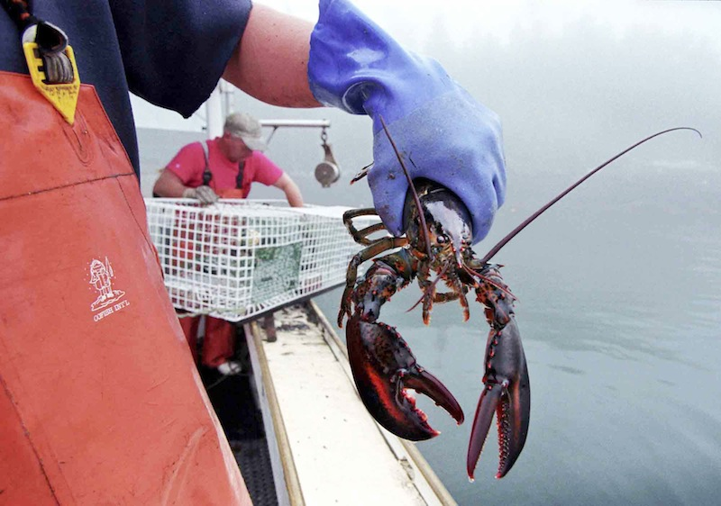 In this undated file photo, a sternman holds a lobster caught off South Bristol, Maine. California has its raisins, Florida has its oranges and Massachusetts has its cranberries. In the coming months, a new marketing strategy will be launched that aims to bolster the brand and sales of Maine lobster. (AP Photo/Robert F. Bukaty, File)
