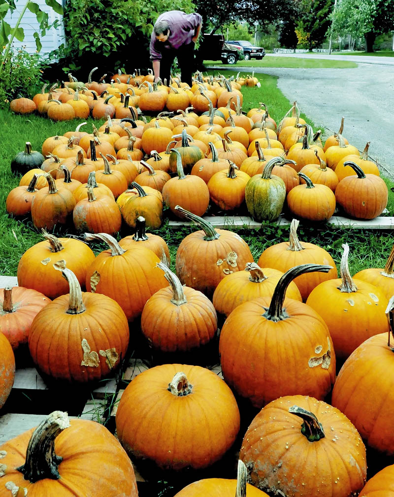 Jordan Gurney places some of the dozens of pumpkins for sale at the Riverdale farm stand in Benton on Tuesday.