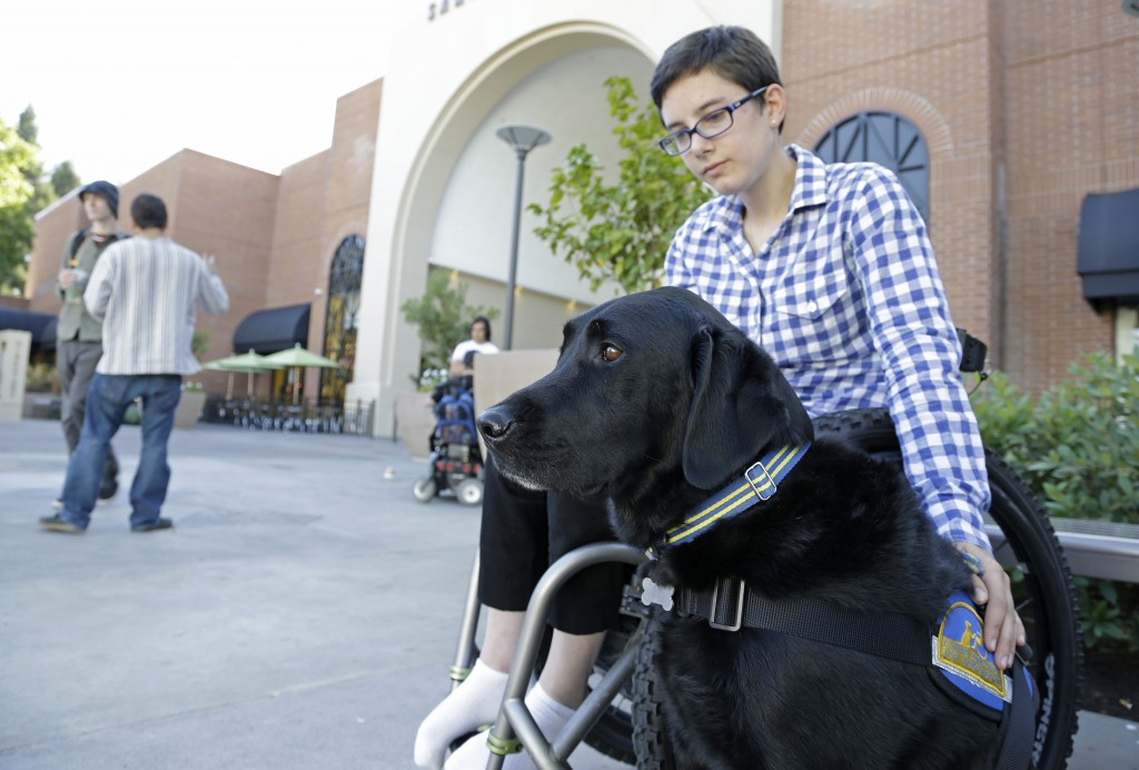 """The Associated Press Wallis Brozman sits with her service dog Caspin outside a shopping mall in Santa Rosa, Calif., recently. Other victims of unruly fake service dogs are real service dogs, said Brozman, 27. """"When my dog is attacked by an aggressive dog, he is not sure what to do about it and looks to me. It becomes a safety issue, not only for my dog, the target of the attack, but me if I am between the dogs,"""" Brozman said."""