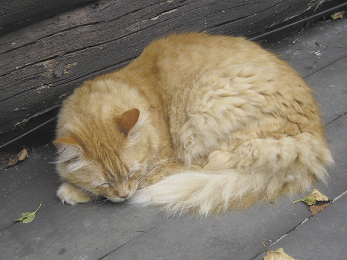 To sleep, perchance to dream, ay, there's the rub. Brian the cat in his most frequent pose in Troy.