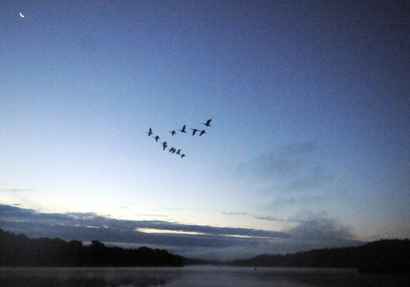 Canada geese rise from the Kennebec River in Chelsea today, on the first day of waterfowl hunting season in Maine. Nimrods were greeted by a warm, sunny dawn while pursuing ducks, geese and upland birds, such as grouse, on opening day.