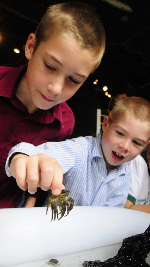 William Carey, left, and Bryce Carey look at a crab from the Coast Encounters touch tank during Earth Science Day on Wednesday at Maine State Museum in Augusta.