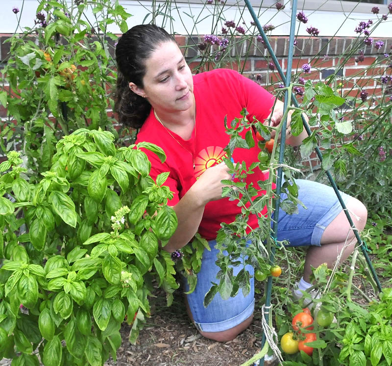 Volunteer Jennifer Johnson harvests tomatoes at one of the vegetable gardens at the George J. Mitchell school recently.