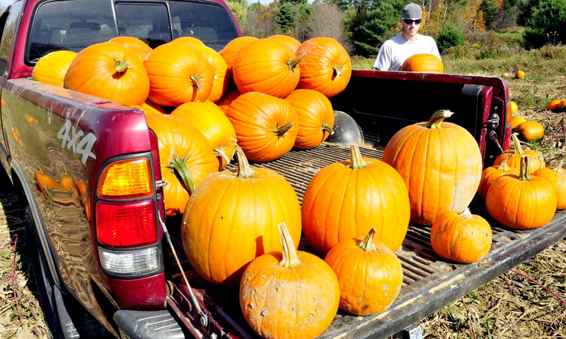Jake Bragg loads into a truck some of the 500 pumpkins from the Bragg family farm in Sidney that will be sold at the Apple Farm in Fairfield on Monday.