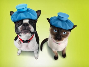 A screen image from the Google Helpouts website, where Banfield Pet Hospital offers free advice on proper nutrition, parasite control, vaccinations and appropriate grooming for pets.
