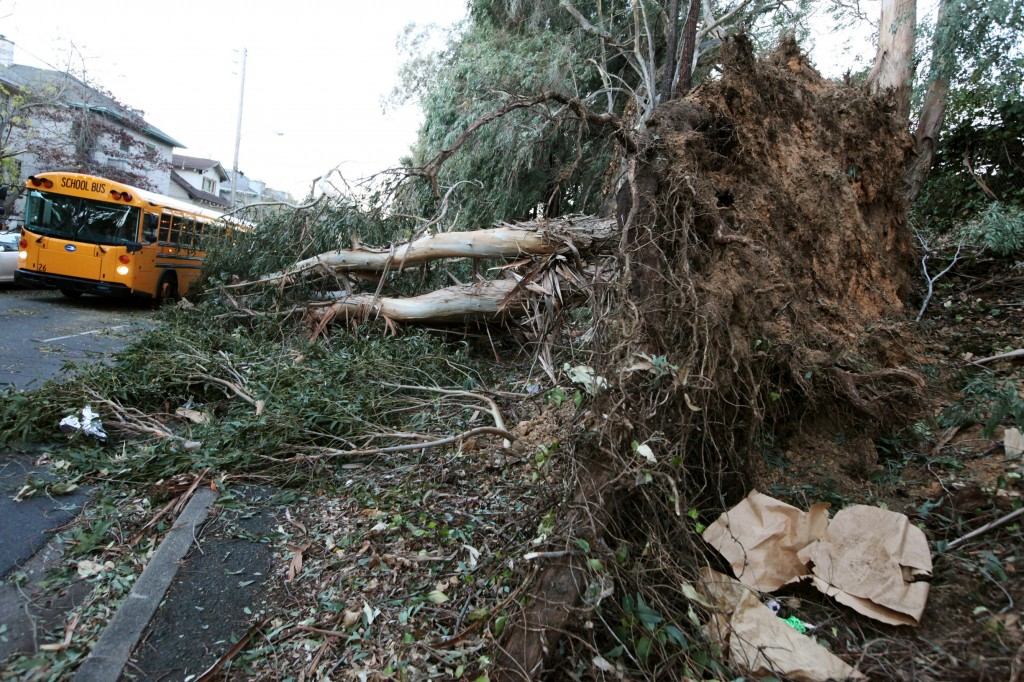 A school bus drives past a fallen eucalyptus tree in Oakland, Calif., on Friday, Nov. 22, 2013. Three people were killed in Northern California as high winds battered the region and caused major power outages, and fallen trees and branches.