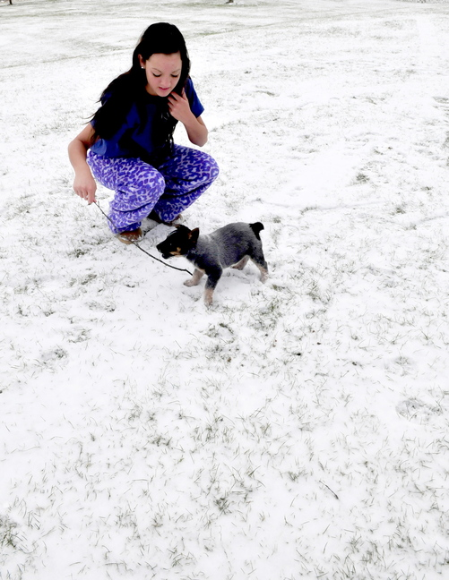 New experience: Taylor Mushero brought out her 8-week-old puppy Boston to check out the new snow for the first time at her home in Fairfield on Tuesday. The dog soon made a dash for the warm house.