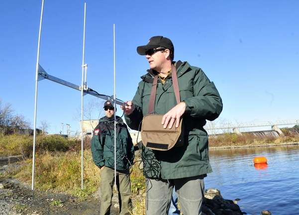 Staff photo by David Leaming FISH STALKER: Department of Inland Fisheries and Wildlife biologist Jason Seiders uses portable radio telemetry equipment to monitor tagged brown trout that were released in the Kennebec River below the Shawmut dam on Oct. 29. A two-year study is underway to determine why trout are not surviving and growing in the area.