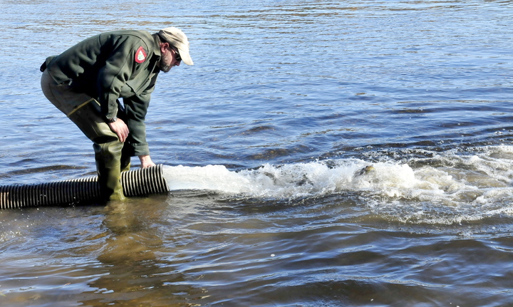 Staff photo by David Leaming FREEDOM: Fish culturist Scott Davis watches as hundreds of brown trout are released into the Kennebec River below the Shawmut dam on Oct. 29.