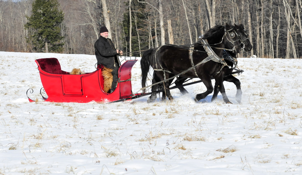 OVER HILL AND DALE: Steve Lemieux, his horses and dogs get some exercise in a sleigh at his farm in Fairfield.
