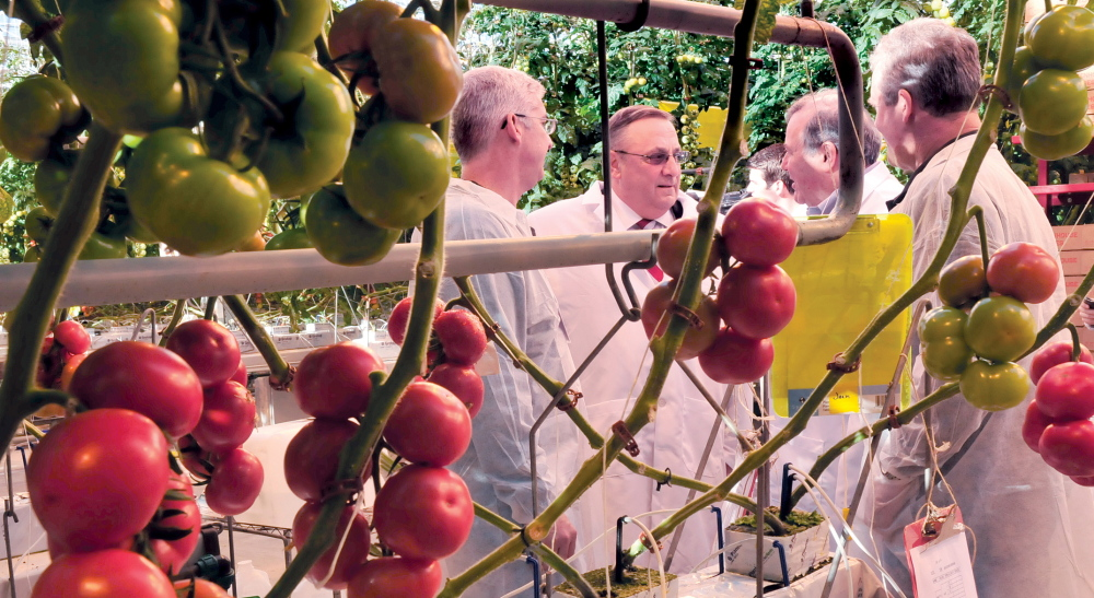 BACK IN BUSINESS: Gov. Paul LePage, second from left, toured Backyard Farms greenhouse in Madison along with company officials, vendors and municipal leaders on Wednesday. From left are company Vice President of Sales and Marketing Tim Cunnliff, LePage, company President and CEO Paul Mucci and head of Growing Operations Arie vander Giessen.