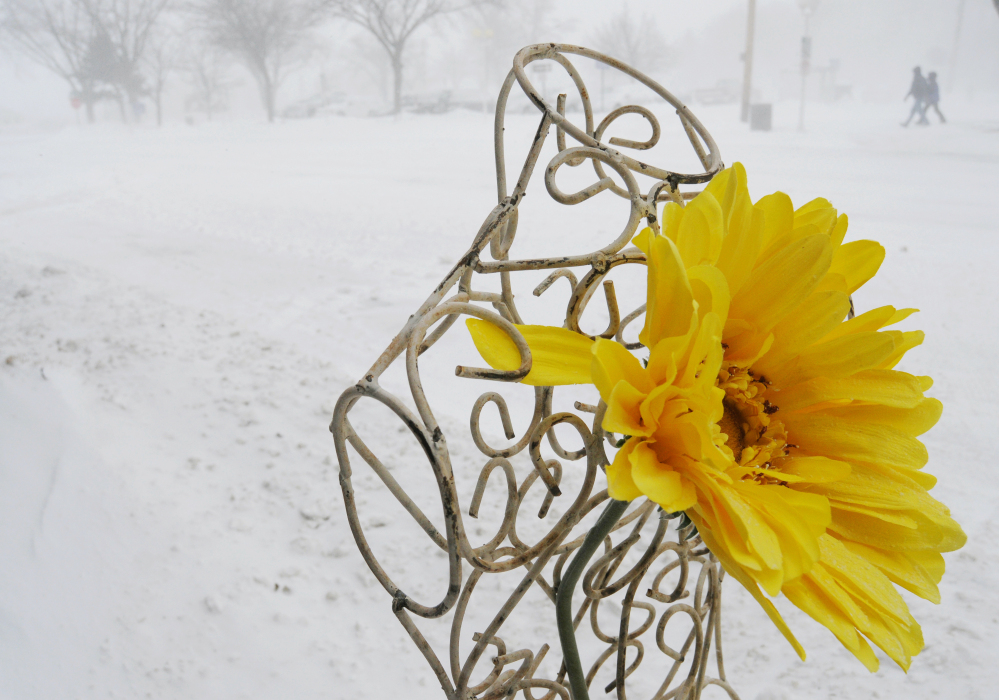 An artificial sunflower sits outside The Lazy Daisy store in downtown as snow falls in St. Joseph, Mich. on Saturday. Blowing and drifting snow covered a number of roads across parts of Michigan, stranding some motorists and prompting others to abandon their vehicles.