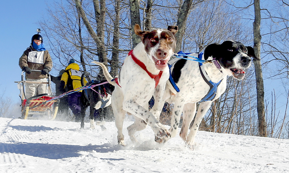 Jeff McRobbie's dogs pull their owner down a hill during the four-dog speed event at the Down East Mushers Bowl Races in Bridgton on Sunday. Teams couldn't win any points at the bowl, which was officially called off, but they ran the course for fun.