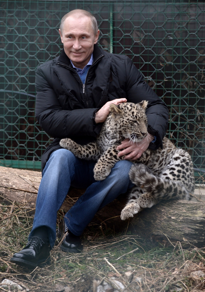 Russian President Vladimir Putin pets a leopard cub at the leopard sanctuary in the Russian Black Sea resort of Sochi Tuesday.