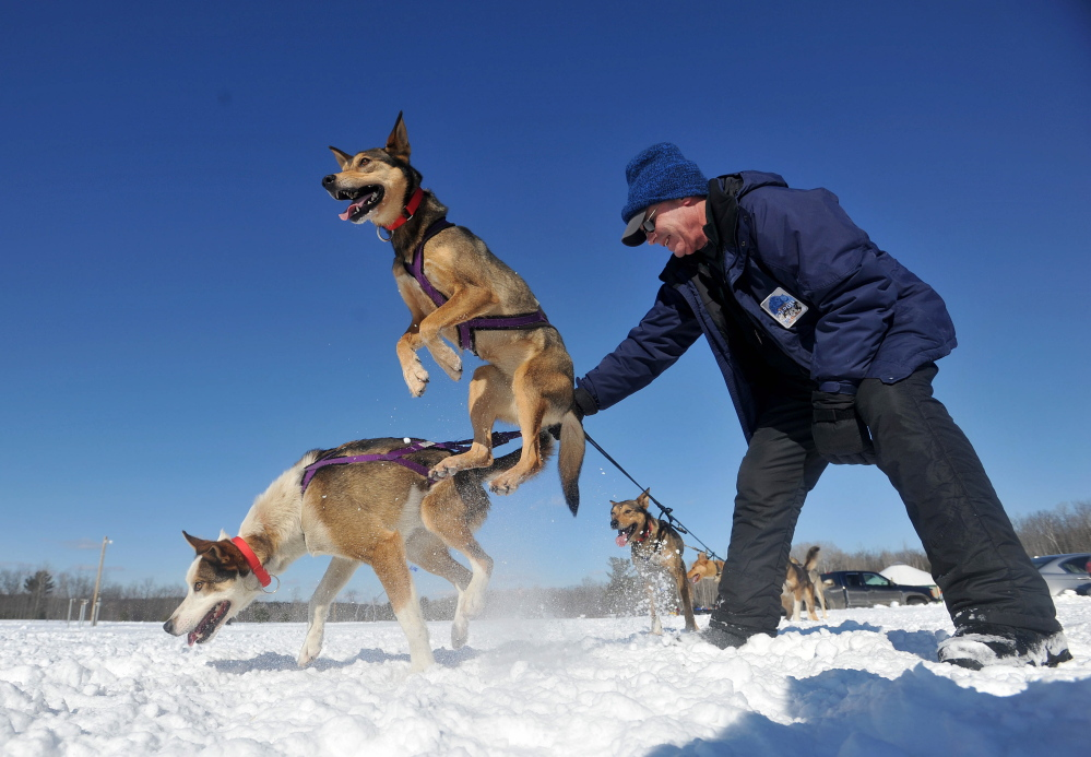 WINTER CARNIVAL: Jim Lepper, a volunteer handler with Heywood Kennel Dog Sled Adventures, holds on to an anxious team at Quarry Road Recreational Area in Waterville on Saturday. Heywood Kennels was offering rides to anyone who wanted ride in the sled.