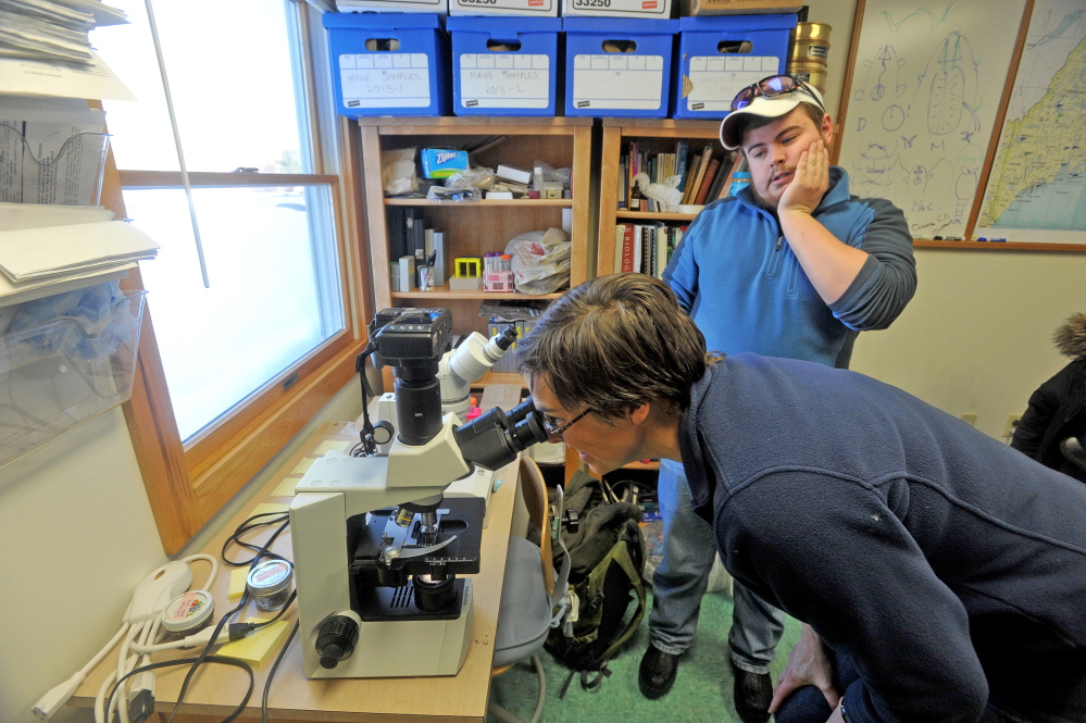 TARDIGRADES: Professor Emma Creaser peers through a microscope at a tardigrade Thursday while in her office as Ben Sawtelle, 19, watches at Unity College.